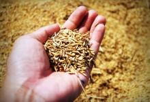 AGRICOLTURA: 21 MILIONI DI EURO PER I GIOVANI AGRICOLTORI ABRUZZESI [SCADENZA PROROGATA AL 31/08]