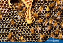 Dalla Regione Abruzzo misure di sostegno per il settore apicoltura
