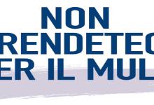 """""""NON PRENDETECI PER IL MULO"""". Campagna stampa di Confartigianato"""